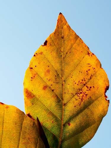 autumn dried leaf fall