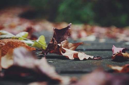 macro closeup photo of brown leaf leaf
