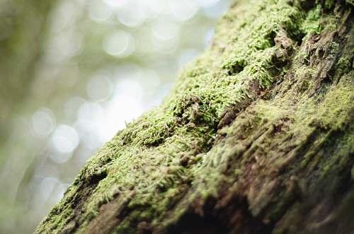 moss green moss on wood tree