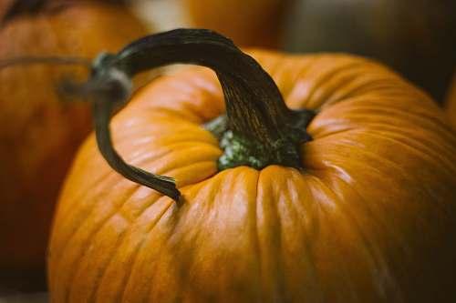squash close up photography of pumpkin food