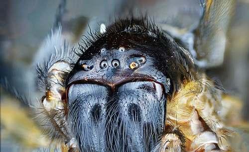 eye macro shot photography of black spider mecro