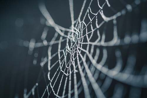 insect selective focus photography of spiderweb halloween