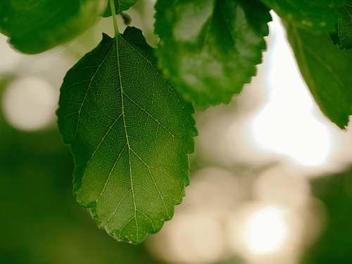 macro green leaf morning