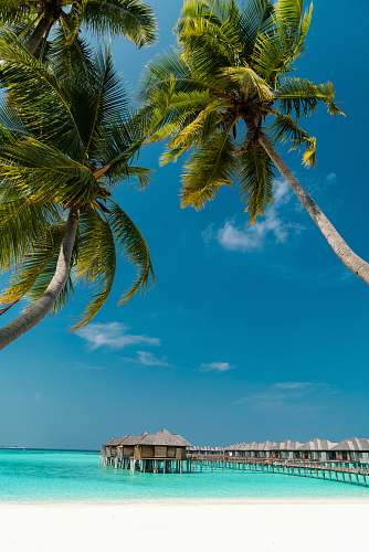summer low angle photography of coconut trees on shore outdoors