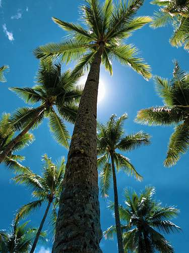 summer low-angle view of palm trees during daytime tree