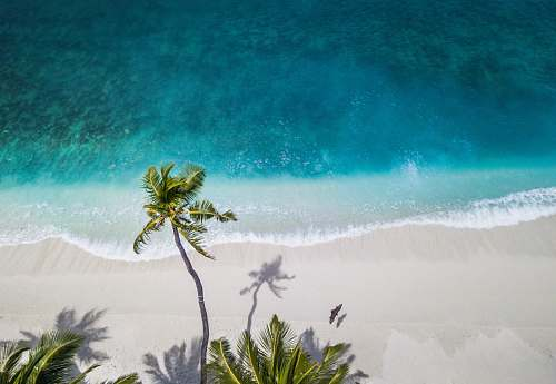 landscape aerial nature photography of green palms on seashore during daytime tropical