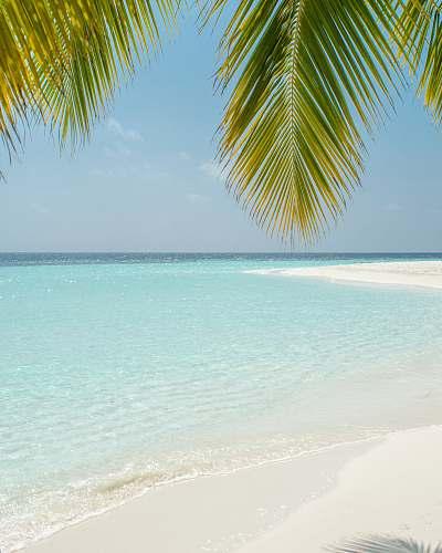 sea green coconut tree beside beach tropical