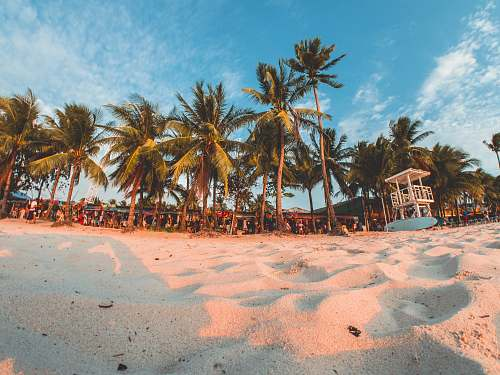 tropical green coconut trees under by cirrus clouds boracay