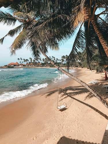tropical white swing on green palm trees bridge