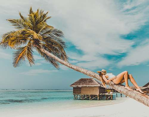 human woman lying on coconut tree trunk at beach person