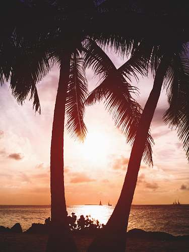 nature two coconut trees beside beach key west