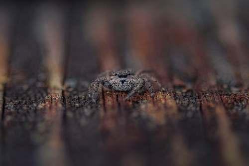 animal macro shot photography of common house spider crocodile