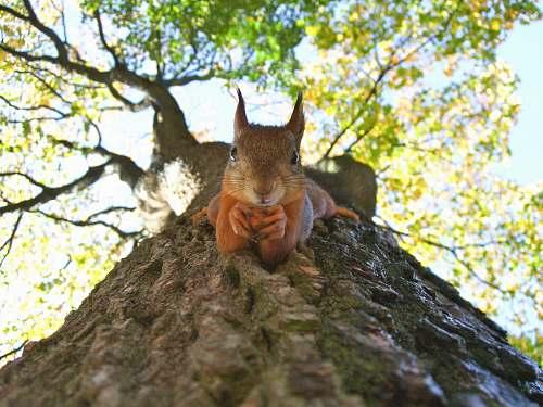 mammal brown squirrel on green leafed tree squirrel