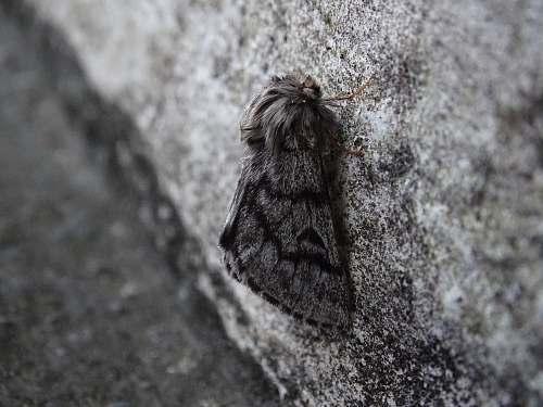 arachnid moth on gray surface invertebrate