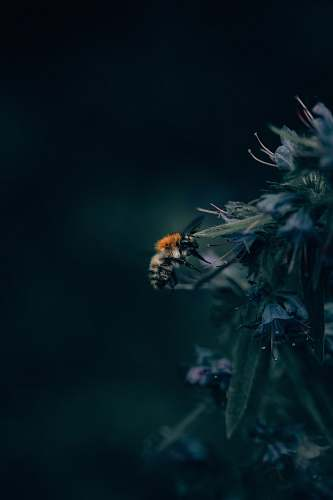 insect black and orange honeybee on flowers in shallow focus photography animal