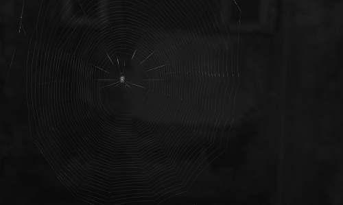 black photo of spider on spider web maharashtra