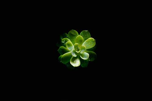plant closeup photography of green succulent plant flora