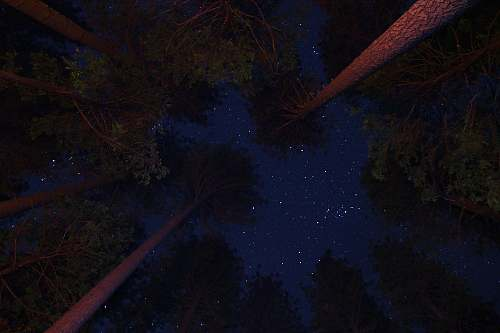 nature low angle photo of trees under night sky outdoors