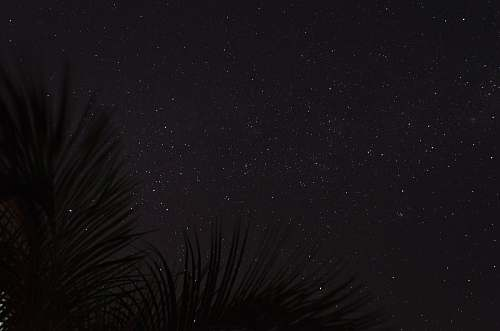 nature silhouette of palm fronds under starry sky outdoors