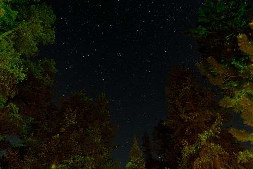 nature trees during night night