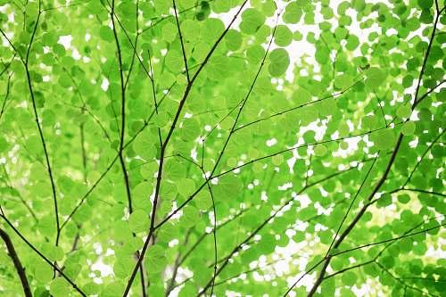 green green leafed tree japan