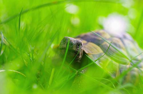 animal brown turtle on grass turtle