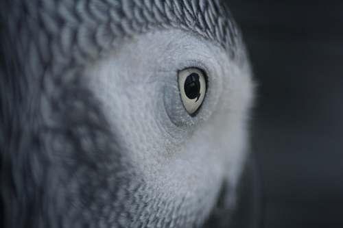 parrot gray and white owl bird