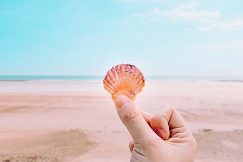 person person holding shell facing sea people