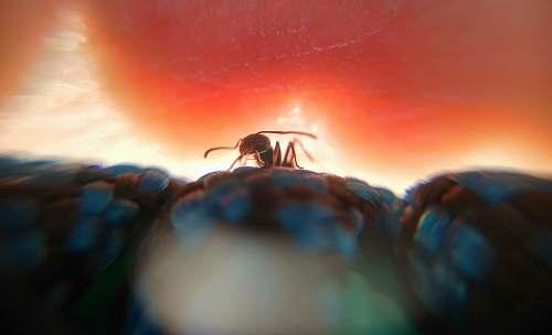 photo animal black ant passeig de la platja free for commercial use images