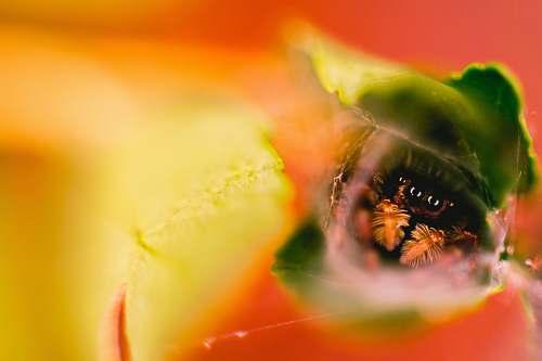 animal green leaf plant bee