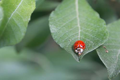 insect red and white bug on green plant animal
