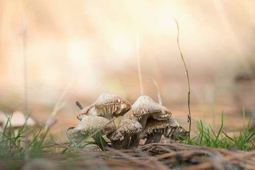 mushroom brown mushrooms on ground agaric