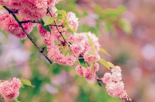 flower macro shot of pink flowers blossom