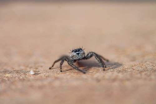 arachnid focus photo of spider invertebrate