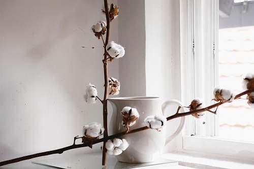 bird white flowering brown plant beside white ceramic teapot art