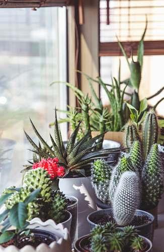 cactus assorted-type cacti succulent