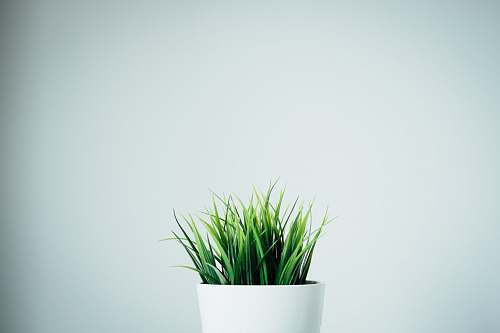 photo pot green leafed plants in white ceramic vase jar free for commercial use images