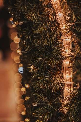 ornament turned-on LED strip on green-leafed plant tree
