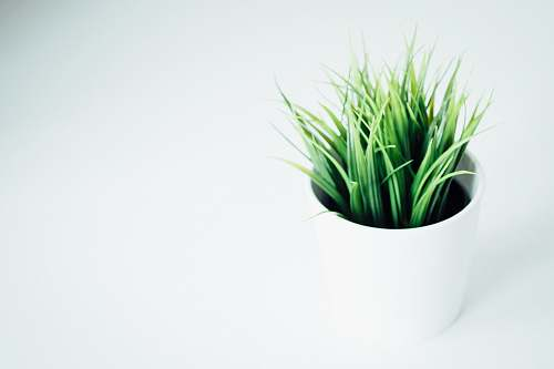 plant green leafed indoor plant on white vase green
